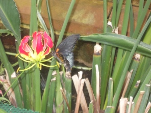 Another shot from the Butterfly House.