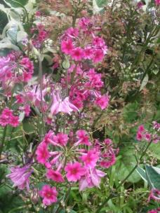 Blenheim in bloom.