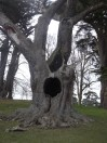 """""""Snape's Tree"""", this is where young Severus is taunted by James Potter in Harry Potter and the Order of the Phoenix."""